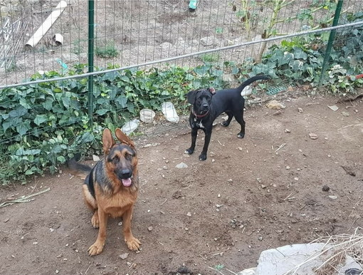Taggia: regione Oxentin sono stati smarriti due cani, l'appello della proprietaria