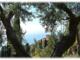 Ventimiglia: sabato 13 giugno riaprono i Giardini Botanici Hanbury a La Mortola, ecco come poterli visitare