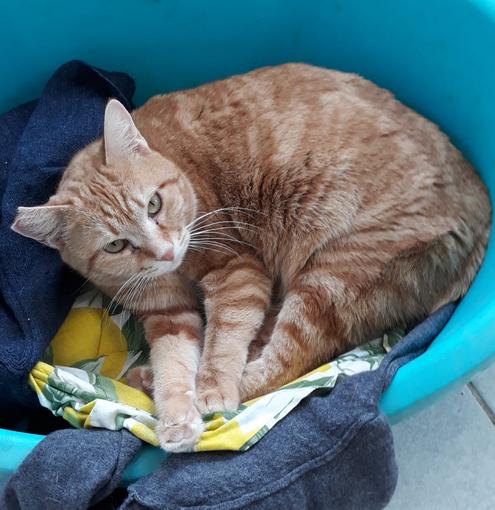 Enpa di Sanremo: la gattina Codina ha bisogno di una nuova famiglia