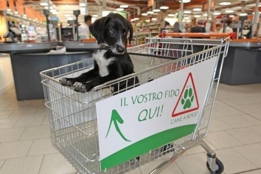 Imperia: nei negozi di generi alimentari, il cane in un carrello ad hoc o in un'area dedicata. La mozione della consigliera Marabello