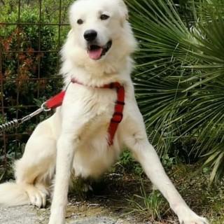 Sanremo: è scappato ora da Coldirodi il cane Dexter, l'appello urgente per chi lo incrociasse