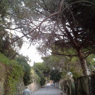 Sanremo: illuminazione assente dal 2019 in zona Tiro a Volo, la segnalazione di una residente