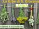 Rezzo: oggi la guida alla scoperta delle erbe spontanee e aromatiche di Lavina