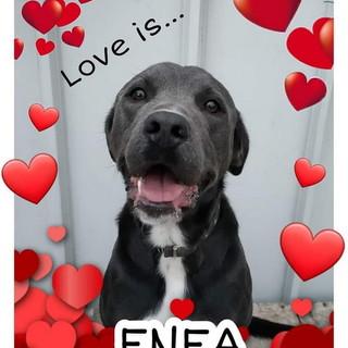 Enpa di Sanremo: il bellissimo cagnolino Enea cerca una casetta