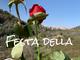 Imperia: per la festa delle donne, il circolo Manuel Belgrano dedica una rosa e una poesia