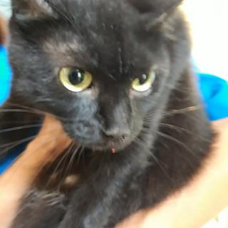 Sanremo: è stata trovata in zona San Siro una gatta, si cercano i suoi proprietari