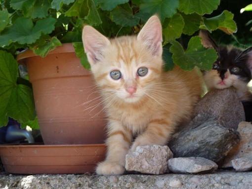 Sanremo: i due gattini sono stati adottati, i ringraziamenti alle loro nuove famiglie