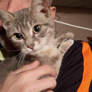 Sanremo: gattina trovata in zona San Lorenzo, un appello per l'adozione