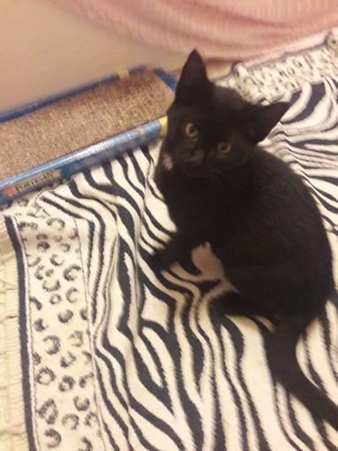 Sanremo: un gattino nero abbandonato per la strada ha bisogno di una nuova famiglia