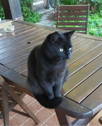 Sanremo: è stato smarrito un gatto nero, l'appello della sua famiglia per riportarlo a casa