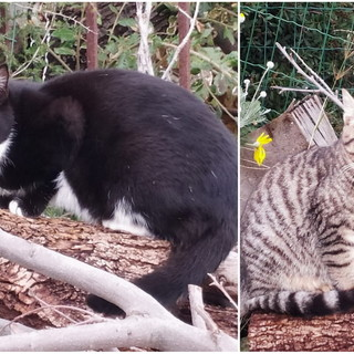 Sanremo; due gattini di cinque mesi cercano nuove famiglie