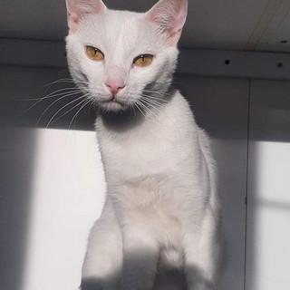 Sanremo: si è persa la gattina Princi in zona Madonna della Costa, l'accorato appello della proprietaria