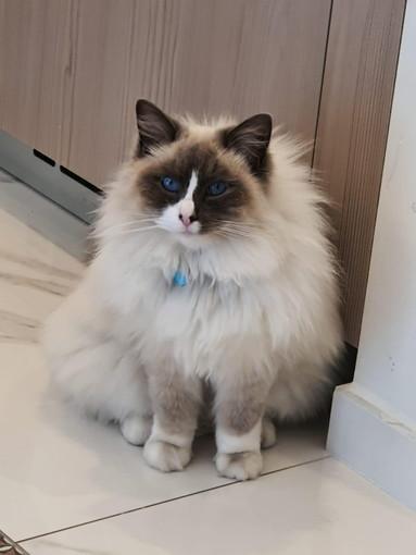 Bordighera: il gatto Nino è stato trovato i ringraziamenti della sua proprietaria