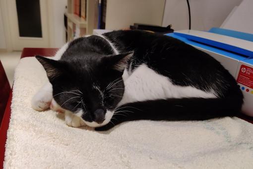 Ospedaletti: trovato stamattina gatto bianco e nero in via Cavour, si cercano i proprietari