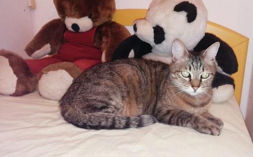 Sanremo: trovato in via Duca degli Abruzzi un gatto, si cercano i suoi proprietari o una nuova famiglia