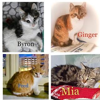 Arma di Taggia: quattro gattini hanno bisogno di avere delle nuove famiglir