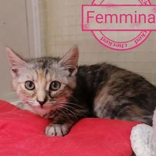 Ventimiglia: tantissimi gattini aspettano di avere delle famiglie