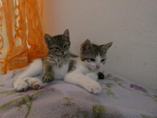 Sanremo: le due gattine Molly e Lince hanno delle nuove famiglie