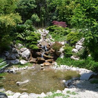 Sanremo: giardino Giapponese di Villa Ormond invaso da cani e bambini a discapito delle tartarughe, la segnalazione di una lettrice