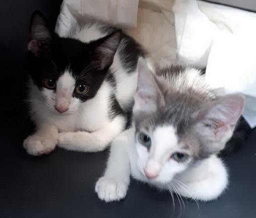 Sanremo: otto bellissimi gattini aspettano di avere delle nuove famiglie