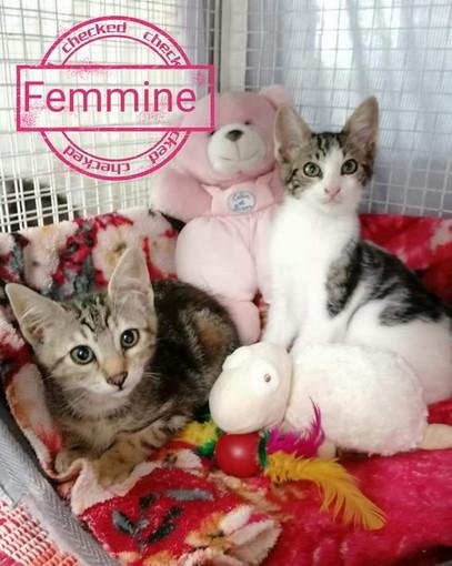 Sanremo: le due gattine di due mesi sono state adottate