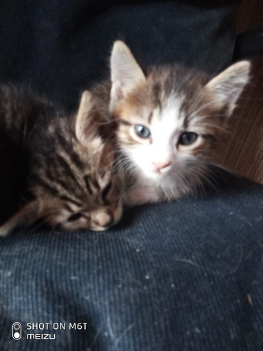 Arma di Taggia: due gattine sono in cerca di nuove famiglie