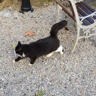 Sanremo: un gatto bianco e nero si aggira in corso Garibaldi, qualcuno lo sta cercando?