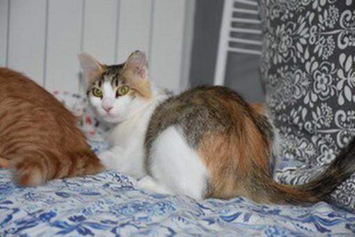 Sanremo: la gatta Pimpi e il suo cucciolo cercano nuove famiglie