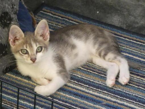 Arma di Taggia: i gattini Kris, Bizet e Mammy aspettano di essere adottati