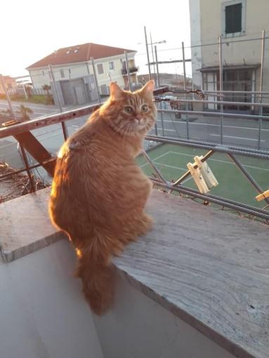 Santo Stefano al Mare: smarrito gatto Jerry in zona ex stazione, l'appello dei proprietari
