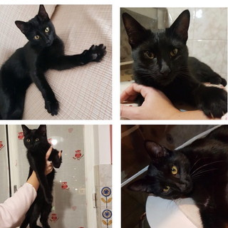Imperia: un gattino nero trovato per la strada ha bisogno di una casa