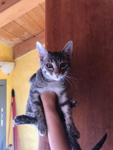 Taggia: due gattini abbandonati nel posteggio di Levà cercano una famiglia che li adotti