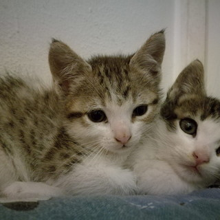 Sanremo: i  quattro gattini hanno trovato tutti delle nuove casette