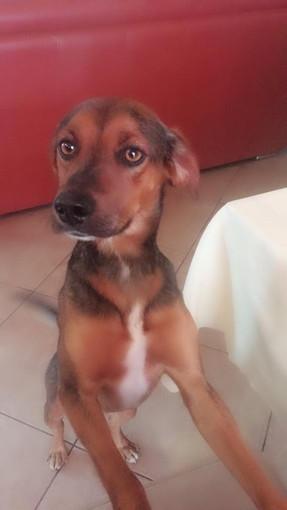 Camporosso: il cagnolino Haci ha urgenza di avere una nuova famiglia