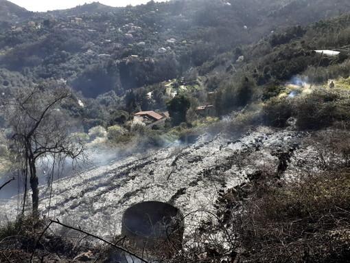 Sanremo, vasto incendio a Verezzo: a fuoco oltre mille metri quadri di campagna