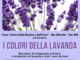 """Taggia domenica si riempie di fiori e profumi con """"I colori della lavanda"""""""