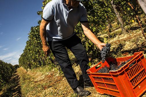 Emersione del lavoro nero, Liguria 'maglia nera' tra le regioni del Nord Ovest: 81.800 sono gli irregolari (Video)