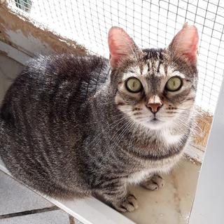Enpa di Sanremo: la gattina Lella cerca una nuova famiglia