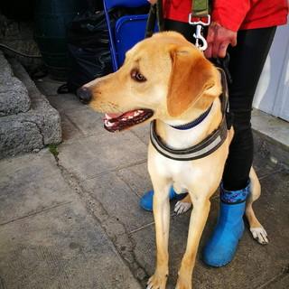 Enpa di Sanremo: il cagnolino Leo aspetta di essere adottato
