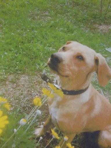 Arkus Un Cane Un Amico Onlus: il cagnolino Mozzy cerca una famiglia per sempre
