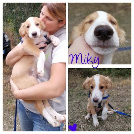 Sanremo: il cucciolo Miky aspetta anche lui di avere una famiglia