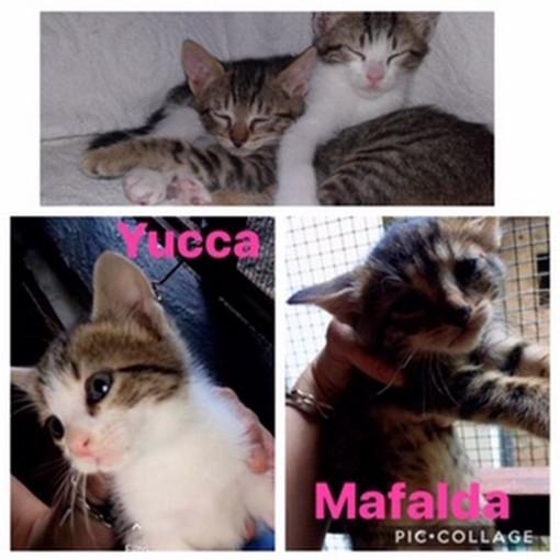 Badalucco: le gattine Mafalda e Yucca aspettano di essere adottate