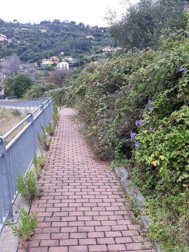 Sanremo: stato di degrado nella mulattiera di Borgo Tinasso, la segnalazione con foto di un residente