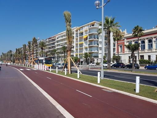 Nizza pianta nuove palme sulla promenade des Anglais e inizia la campagna di lotta tutta Bio contro il punteruolo rosso