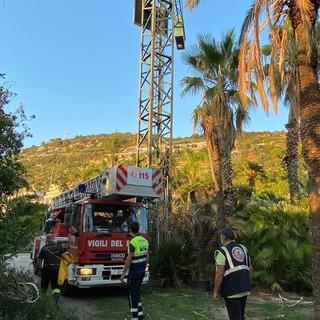 Riva Ligure, rimosso un grosso di vespe velutine: i ringraziamenti alla protezione civile di Pompeiana e ai vigili del fuoco (foto)