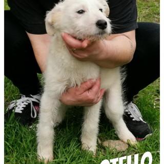 Sanremo: Otello cucciolotto di tre mesi aspetta di essere adottato