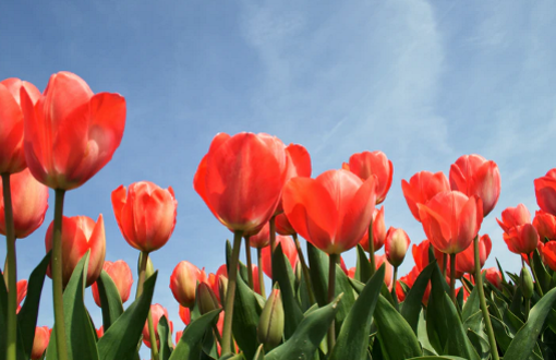 Piante bulbose: dove trovarle e come crescerle