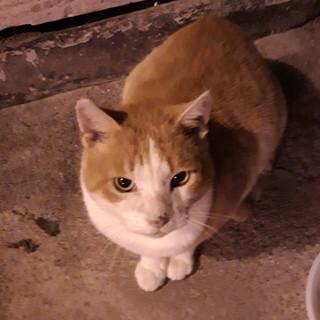 Sanremo: il gatto Puntino è in cerca di una nuova famiglia