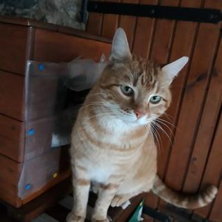 Sanremo: il gatto Paperino aspetta di essere adottato