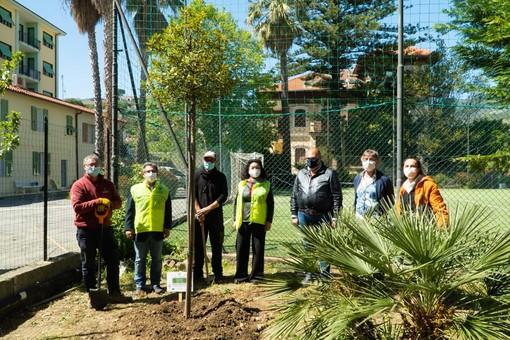 Riva Ligure, piantato dai Lions un albero di alloro nel giardino delle scuole medie (foto)